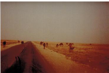 Achtung..Kamele
